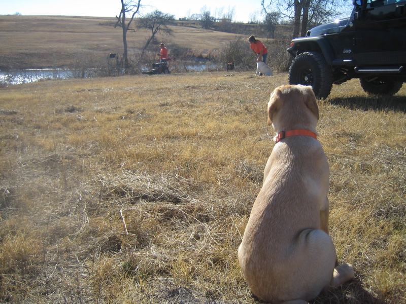 Yellow Labrador Retriever IMG_1140.JPG