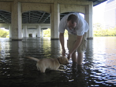 yellow lab IMG_0741.JPG